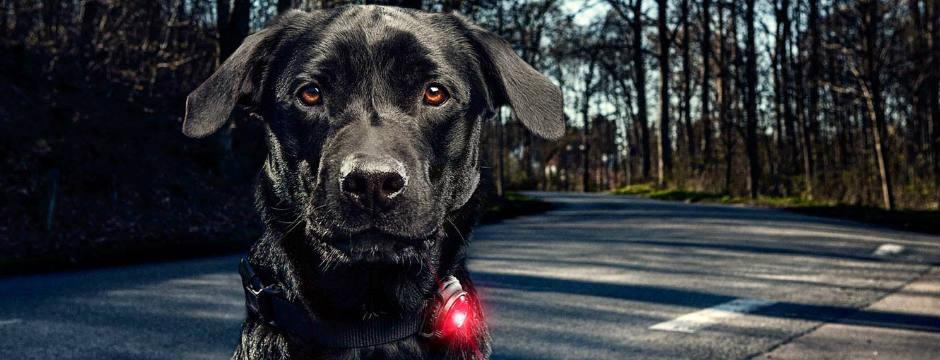 Hondenlicht